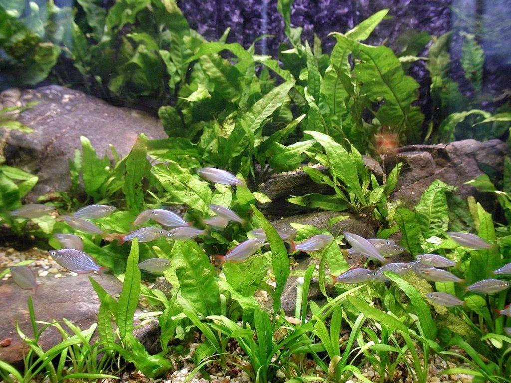 piante acquatiche 2