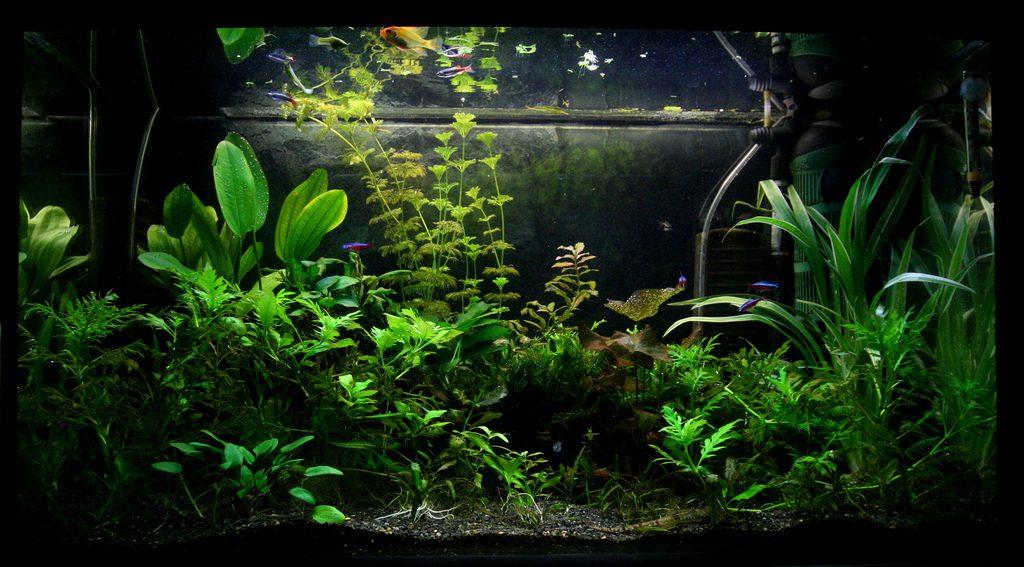 piante acquatiche 3