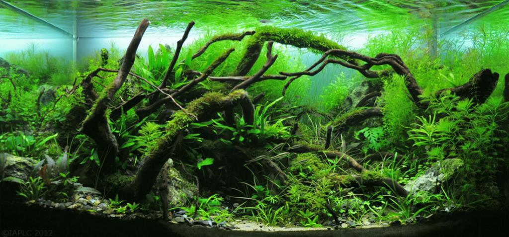 piante acquatiche 4