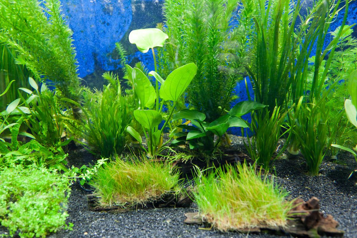 Plafoniera Led Fai Da Te Acquaportal : L acquario di nicola galletti acquaportal