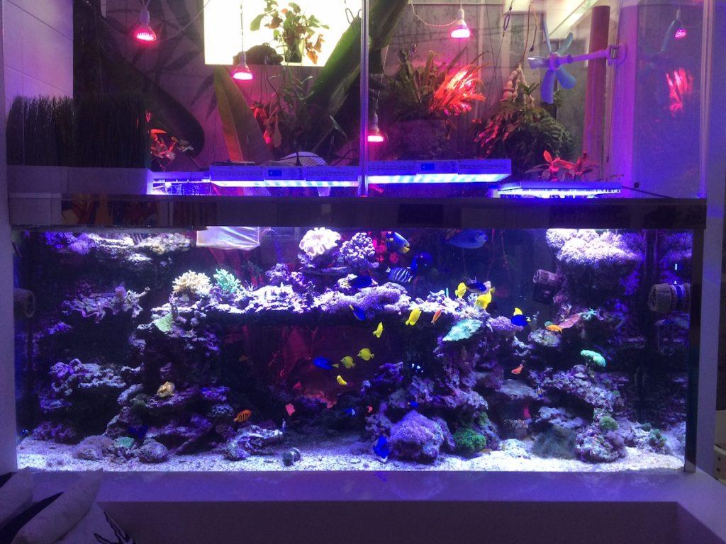acquario da 2.600 litri 12
