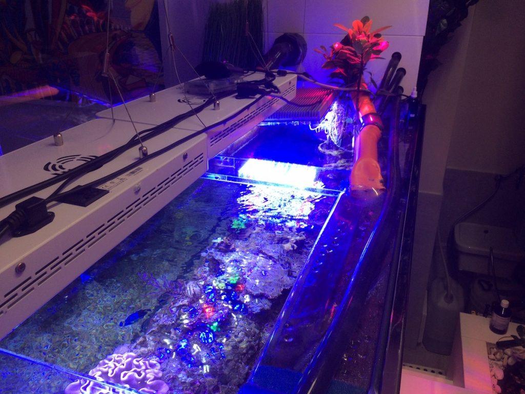 acquario da 2.600 litri 8