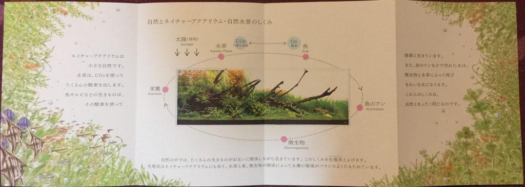 takashi amano 1
