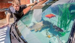 acquario in auto