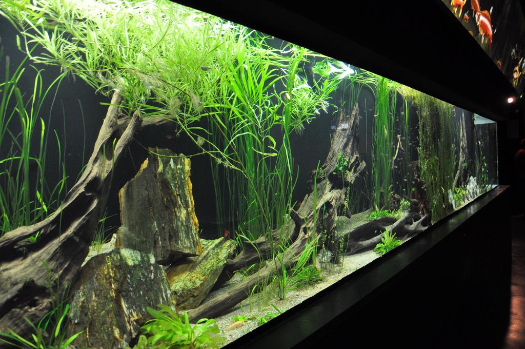 acquario per ciclidi amazzonia