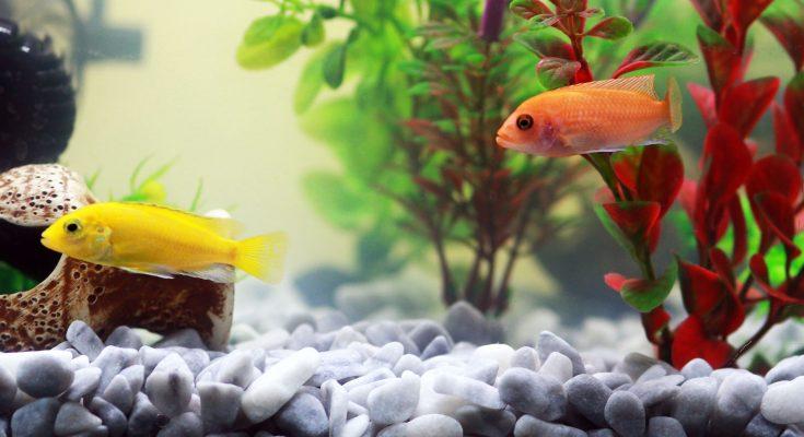 come dormono i pesci