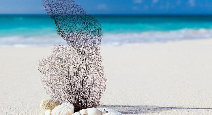manutenzione dell'acquario in caso di vacanze