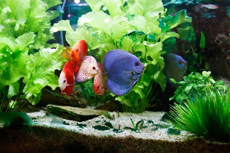 tenere dei pesci 1