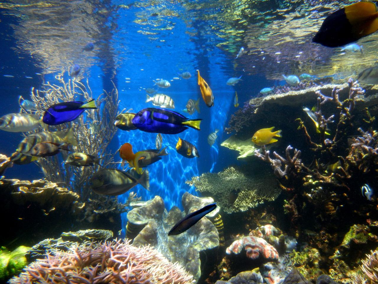 tenere dei pesci 2