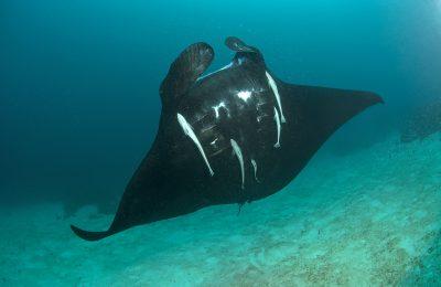 viaggio naturalistico subacqueo
