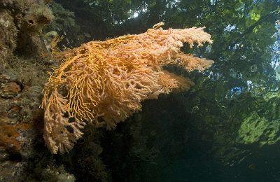la foresta incontro il mare