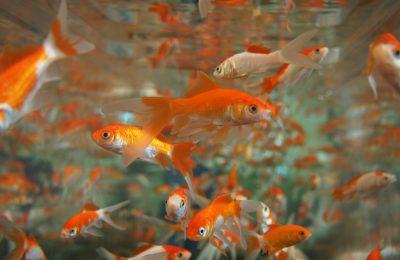 acquario di parigi rifugio pesci rossi