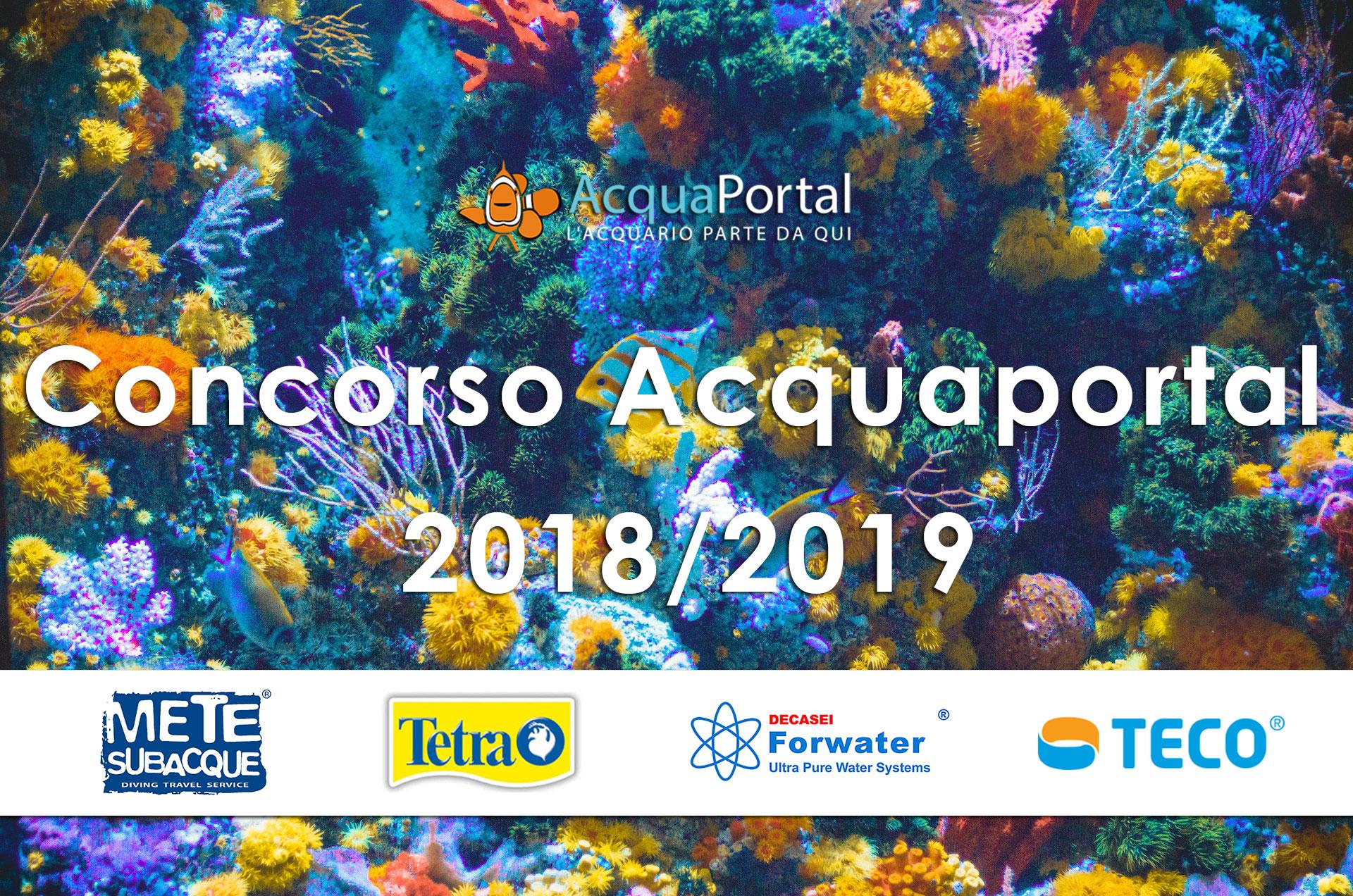 concorso acquaportal 2018 2019