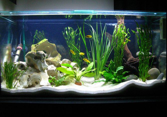 risparmiare acquario