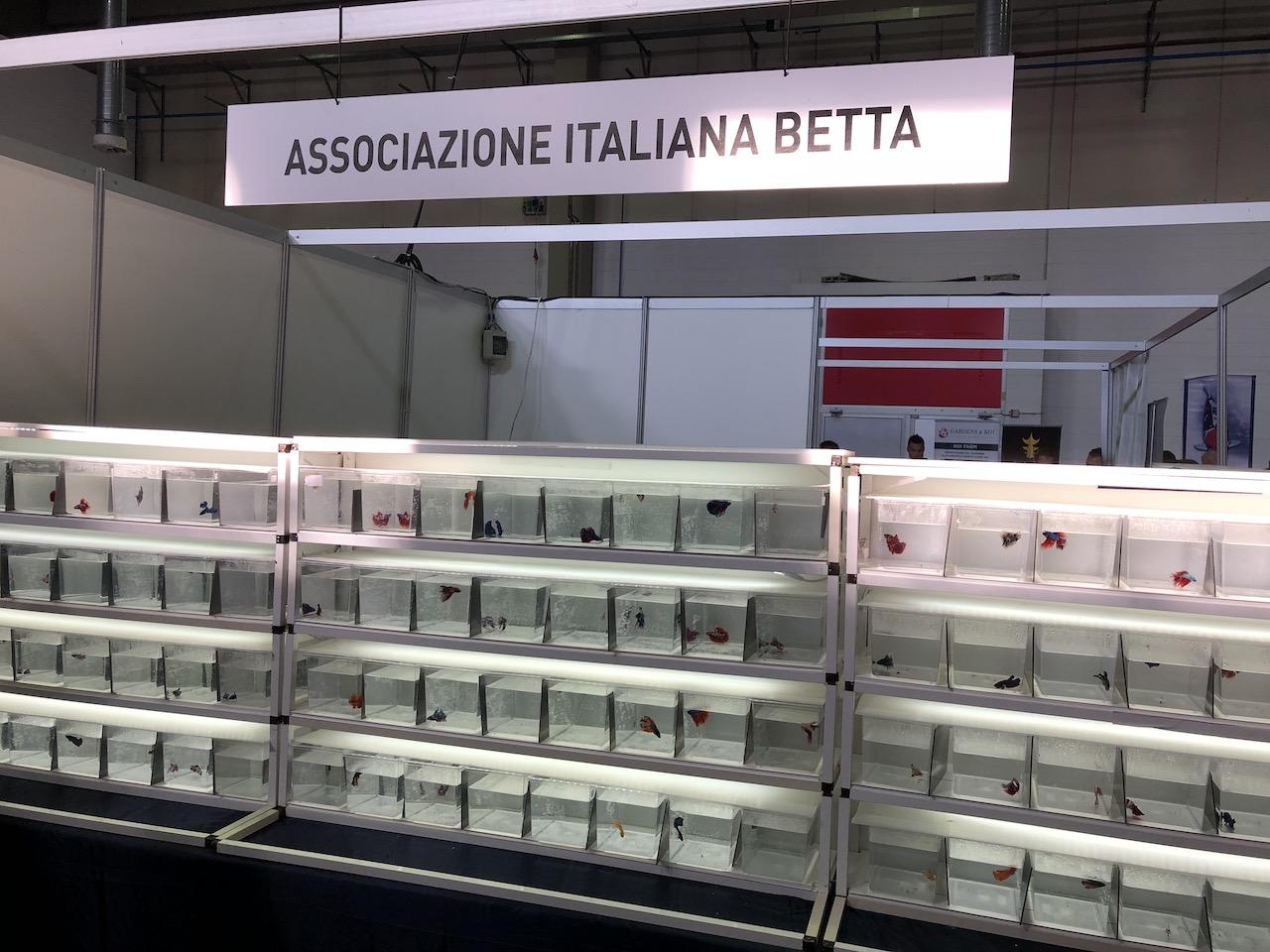 Associazione Italiana Betta 1
