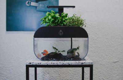 EcoGarden