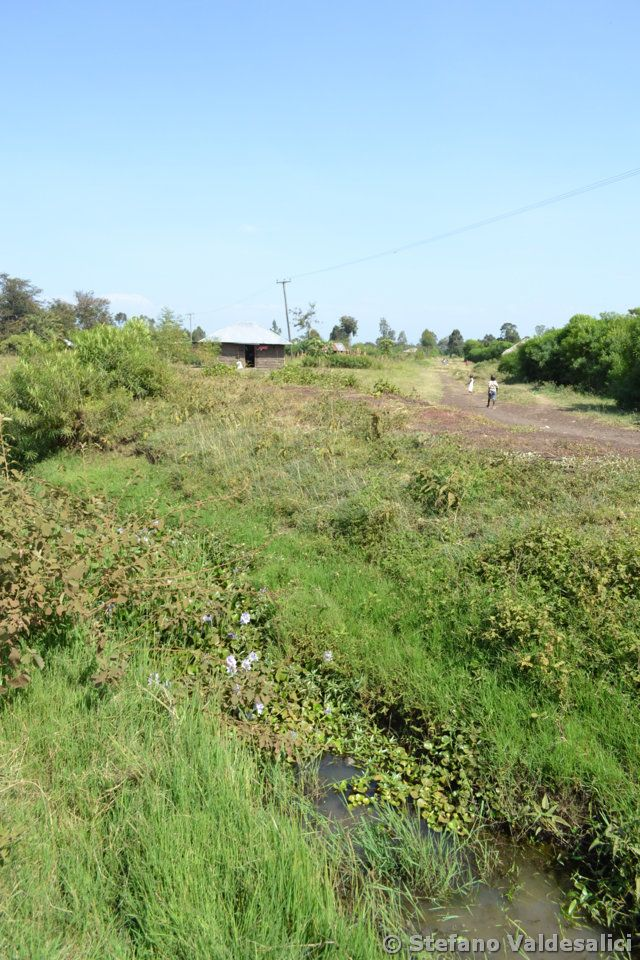 142-road-side-channels-near-odienya-with-no-Nothobranchius