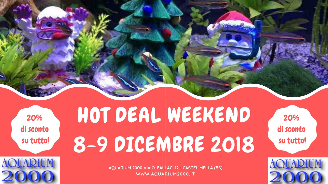 Hot-deal-weekend