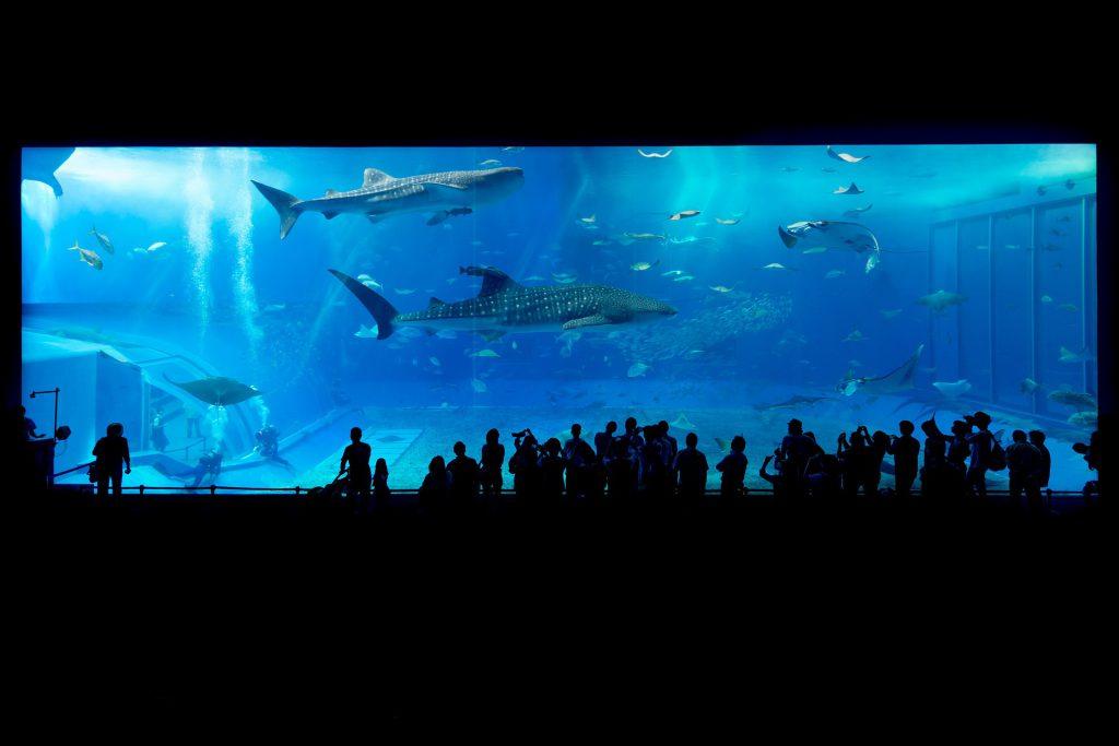 ambiente acquatico
