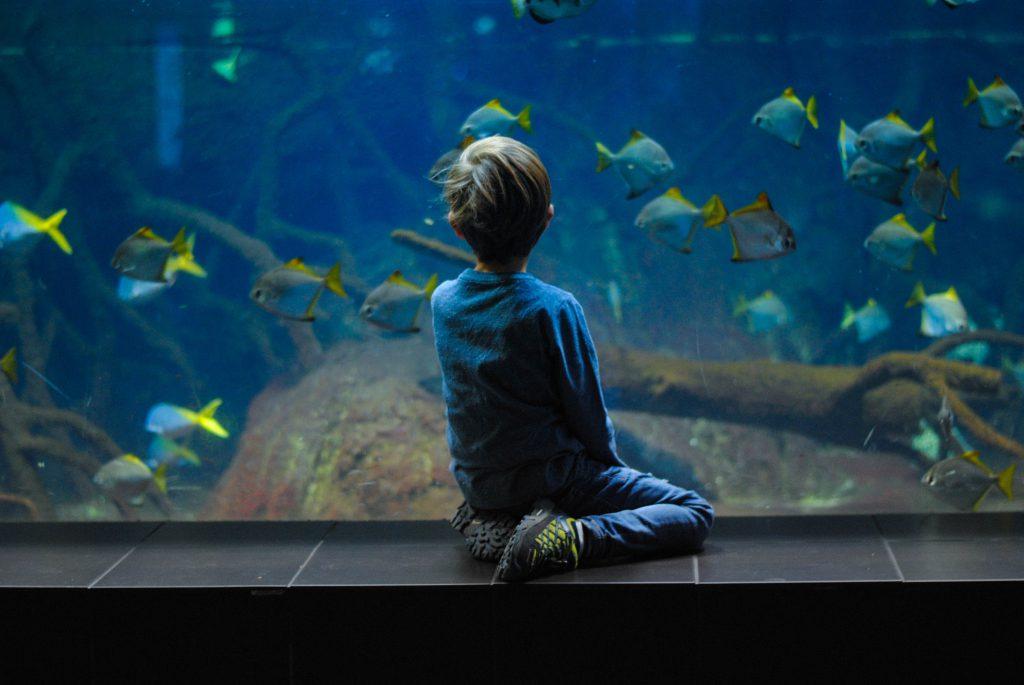 benessere psicofisico contemplazione acquario