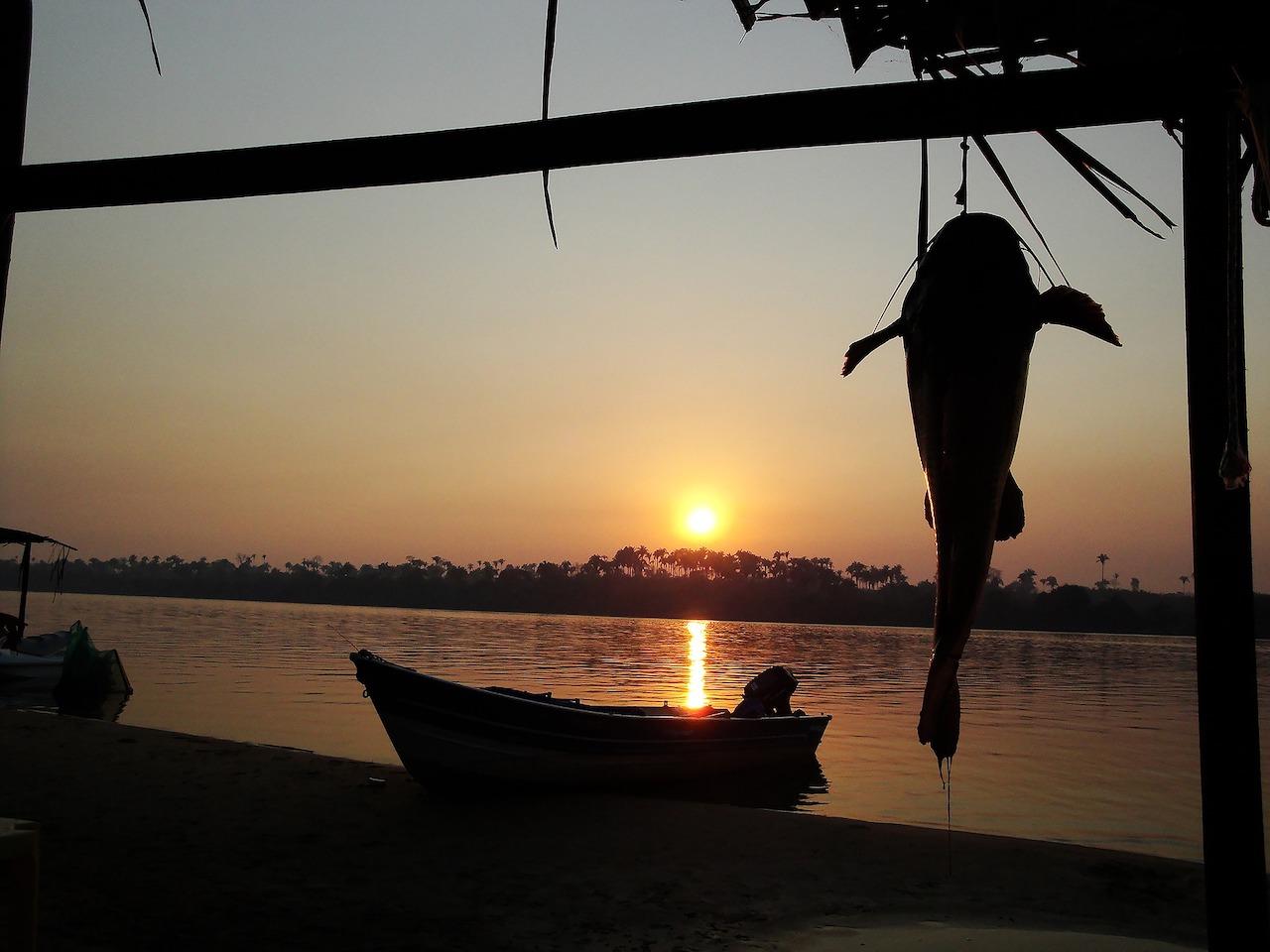 pesci rio delle amazzoni