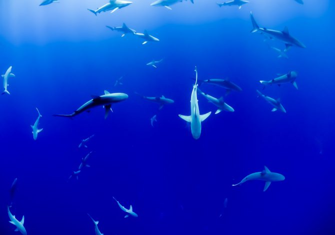 sharkpulse