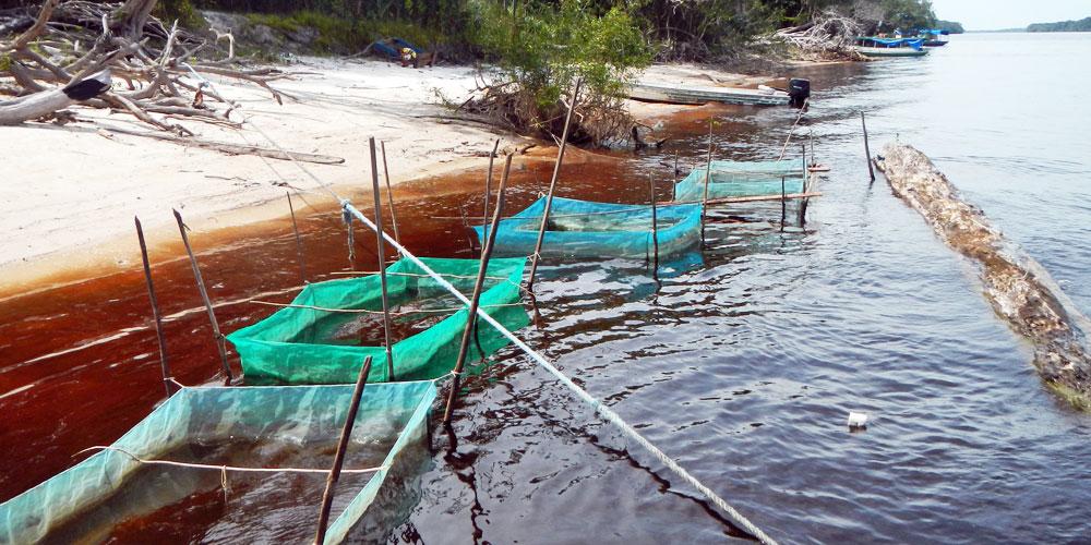 Strutture per lo stoccaggio dei pesci catturati