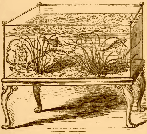 Acquario del 1850