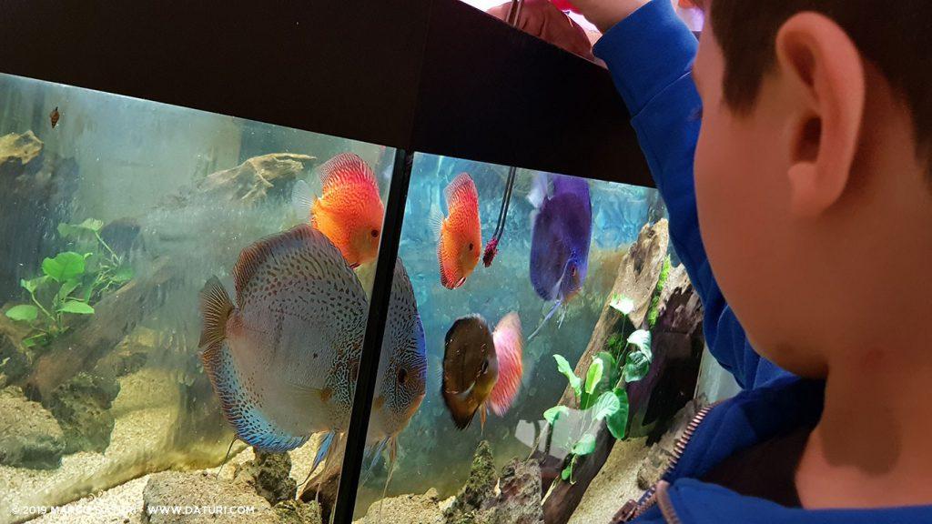 Avvicinare i bambini all'acquariofilia