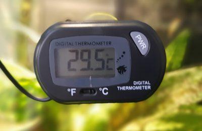 Temperatura acqua alta acquario dolce