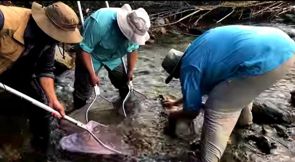 Cattura di pesci in natura