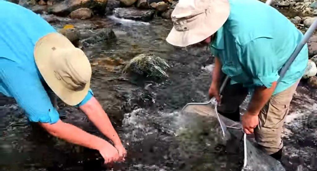 Pesca di pesci wild